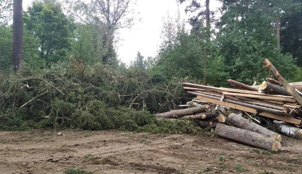 остатки стволов деревьев