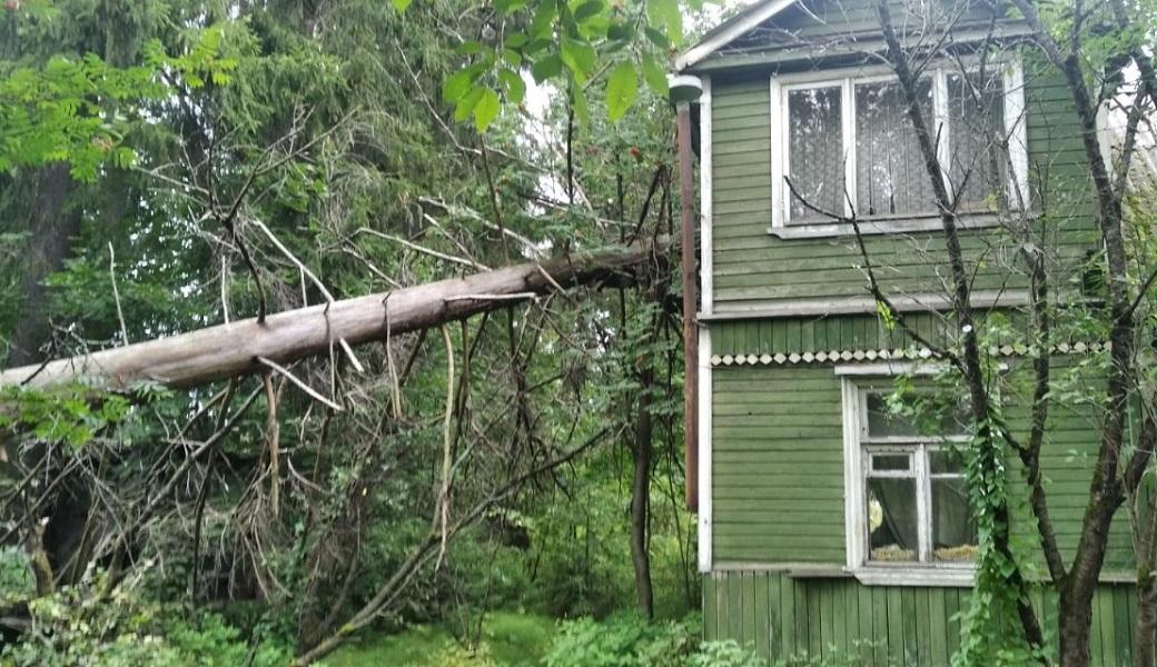 падающие дерево
